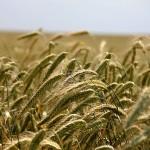 Landwirtschaft Helfern und Helfer in der Landwirtschaft