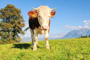 Jobs als Tierpfleger
