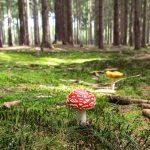 Helfer Forstwirtschaft