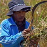 Saisonarbeitskräfte Landwirtschaft